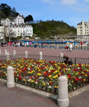 Flowers on the promenade